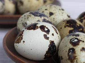 jakarta telur